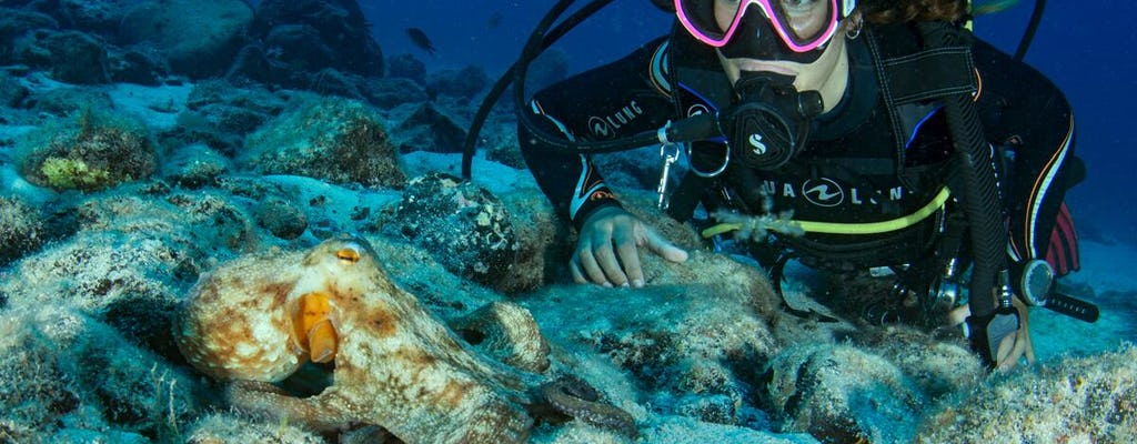 Scuba Diving Experience in Corralejo