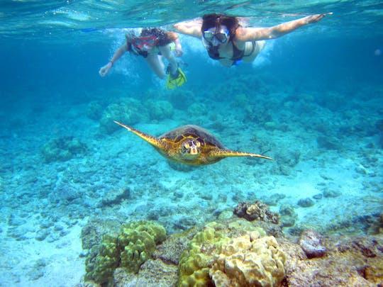 Dominican Republic Scuba Diving Immersion Course