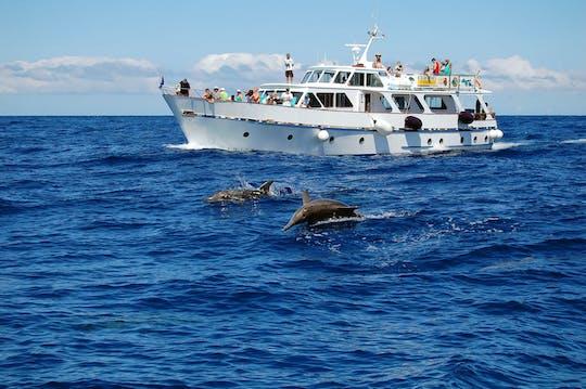 La Gomera Whale Watching Cruise from Playa Santiago