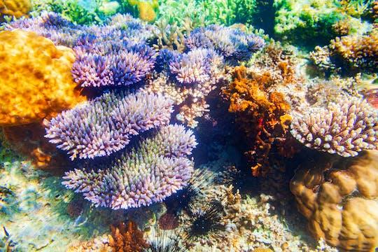 Tour di un'intera giornata alle barriere coralline e ai relitti di Coron