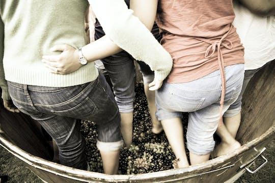 Топает опыт винограда в лес Pastras