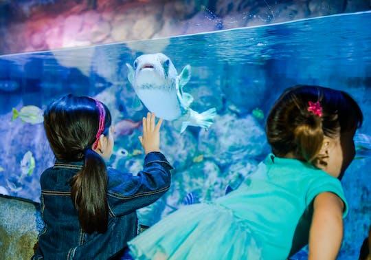 Tickets für das SEA LIFE Aquarium San Antonio