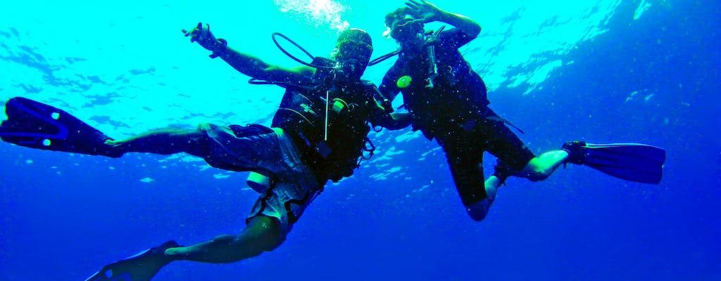 Delphinus Dives by Shore in Lanzarote