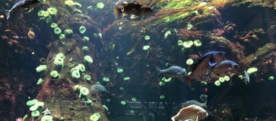 Private Wildtiertour durch das Vancouver Aquarium und das Bloedel Conservatory