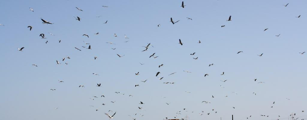 Obserwowanie ptaków z quadem w Sharm
