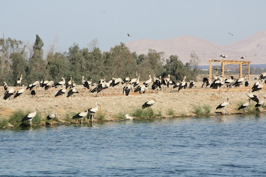 Bird watching with sand buggy experience in Sharm