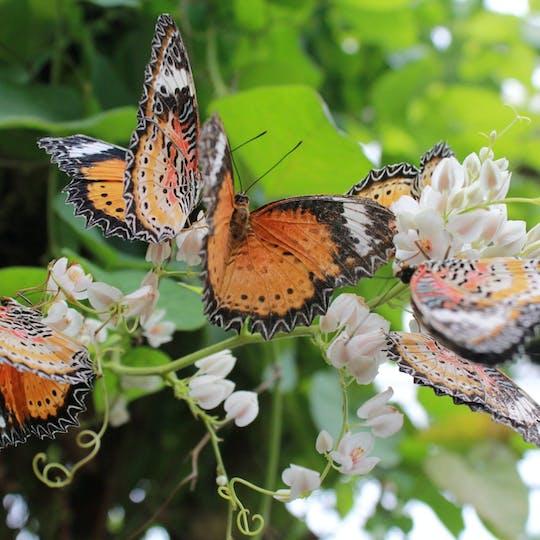 Biglietti Entopia by Penang Butterfly Farm