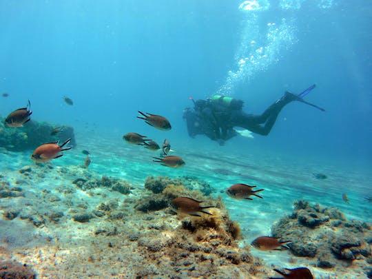 Plongée sous-marine au sud de Fuerteventura