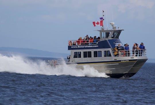 Passeio de catamarã de 3 horas para observação de baleias em Victoria