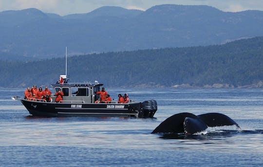 Fauna marinha e passeio de observação de baleias em Victoria