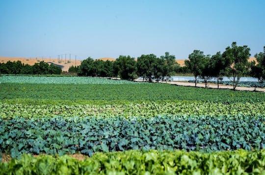 Bezoek een boerderij uit Abu Dhabi