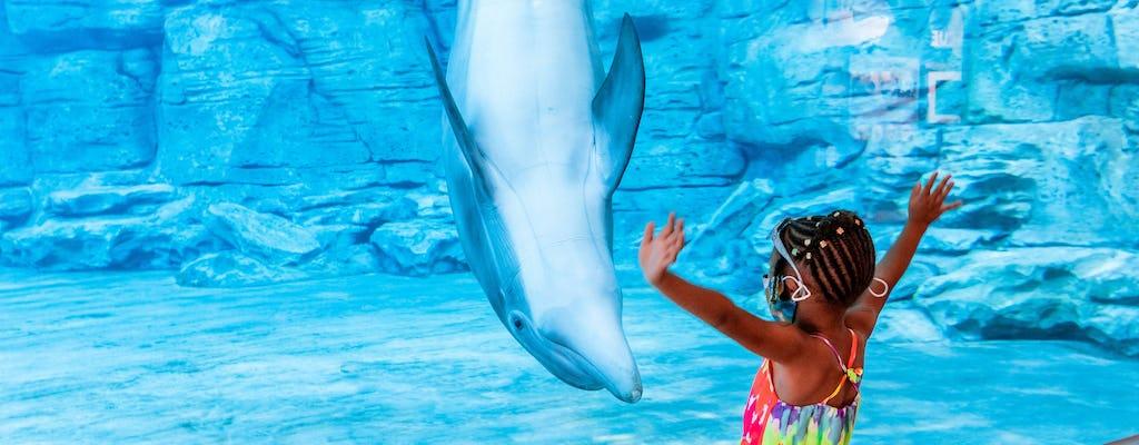 Avventura di Clearwater Beach e Marine Aquarium con pranzo
