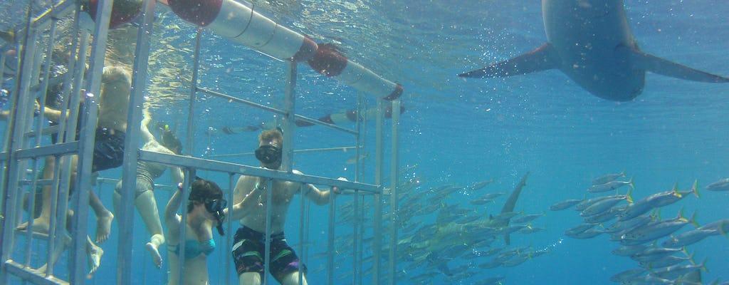 Tour degli squali di Oahu