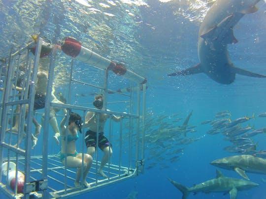Visite des requins d'Oahu