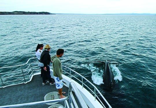 Tour en crucero de avistamiento de ballenas