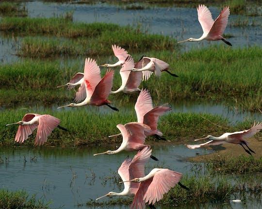 Excursão de aventura de dia inteiro no Parque Nacional Everglades com caminhada seca