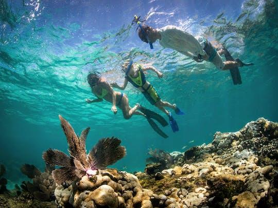 Eco-avontuur op zee in Florida Keys
