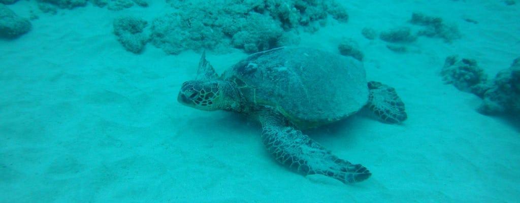 Waikiki-schildpad, snorkel en lunch