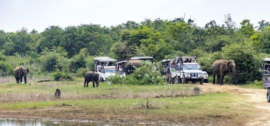 Safari privato del Parco Nazionale di Udawalawe dalla regione di Galle