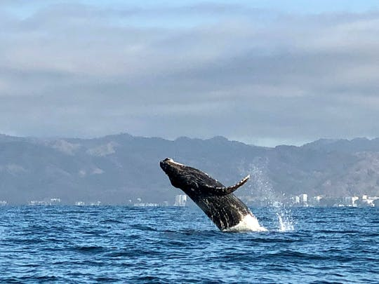 Whale Watching Photo Safari - Ticket Only
