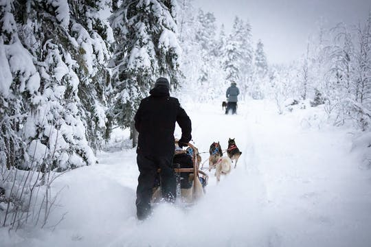 Levi self-driving husky sled tour