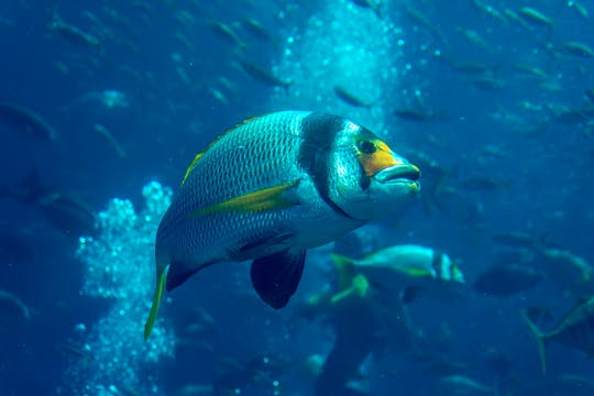 Discover the Atlantis Fish Tales of Dubai