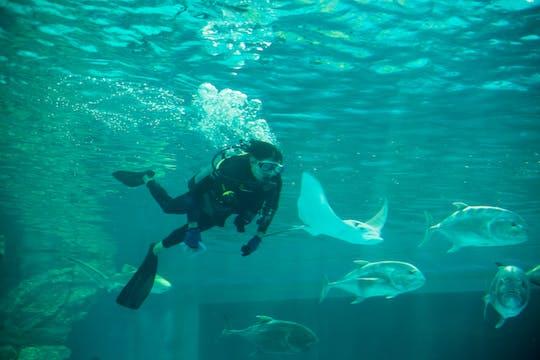 Przeżyj certyfikowane nurkowanie Atlantis Explorer w Dubaju