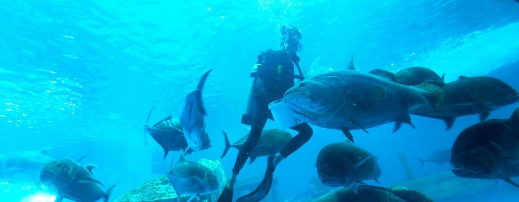 Experiencia de submarinismo Atlantis Discover
