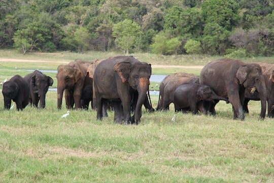 Частный однодневный тур по национальному парку Уилпатту из региона Негомбо