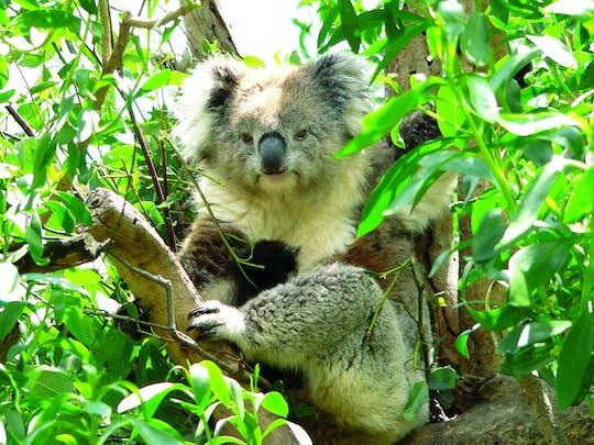1-дневное открытие дикой природы острова Кенгуру