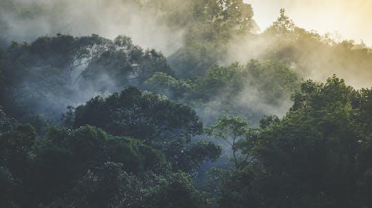 Half-day Langkawi rainforest trekking
