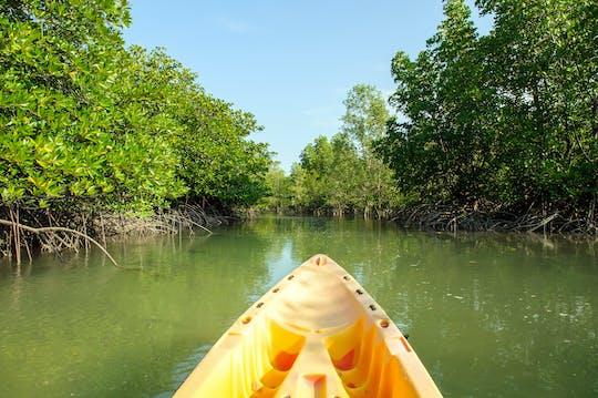 Excursion d'une demi-journée en kayak sur la mangrove de Langkawi