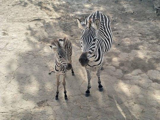 Costa Rican Savannah Safari and Wildlife Tour