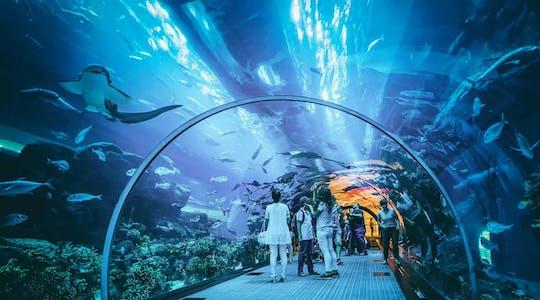 VIP-билеты в Дубайский аквариум и Подводный зоопарк