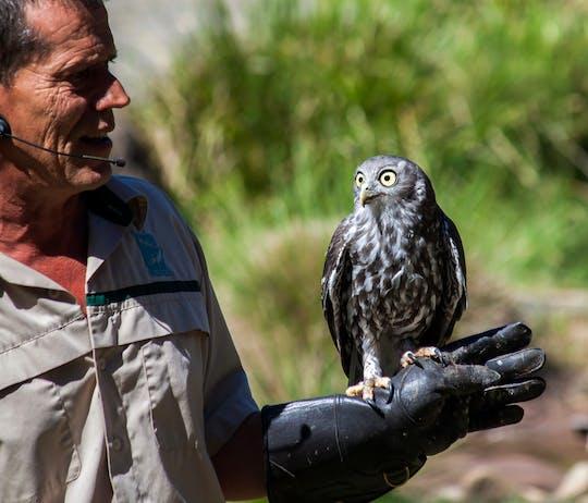 Tour in autobus del Santuario di Healesville e del Parco Naturale di Phillip Island