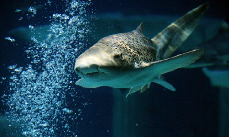 Legoland California Sea Life Aquarium Ticket 2 Parcs