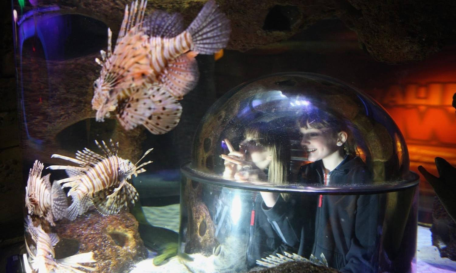 Freshwater aquarium fish orlando - I Drive 360 Attractions Orlando Eye Madame Tussauds Sea Life Aquarium
