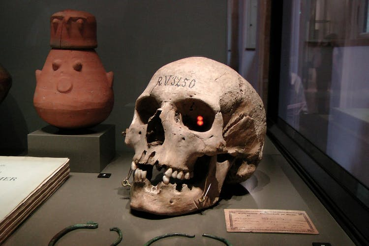 Neues Museum Berlin Neanderthal skull.jpg