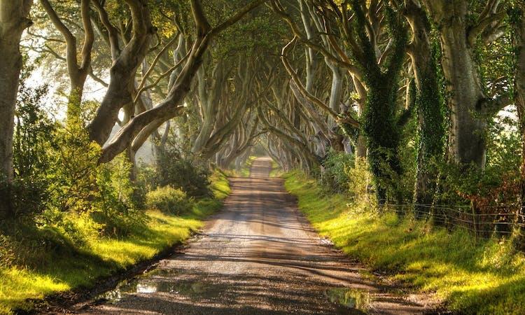 The Dark Hedges Northern Ireland.jpg
