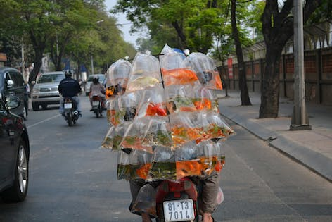 Ho Chi Minh street food tour by motorbike