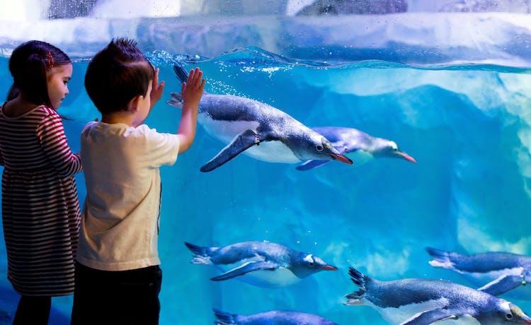 Penguins (2).jpg