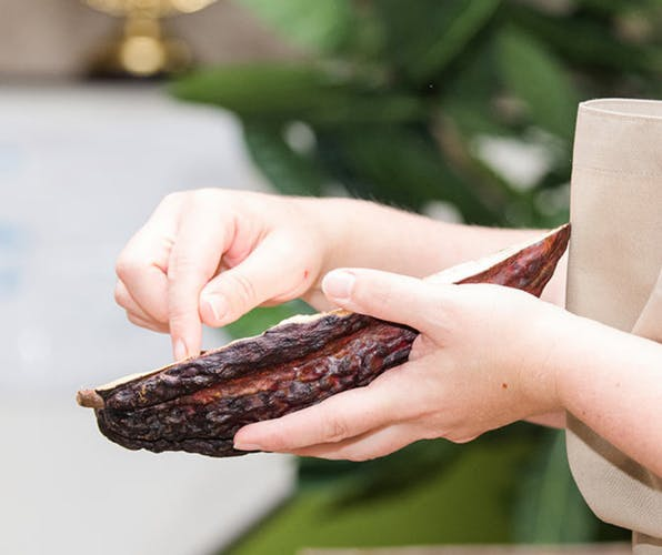 7 Cacao fruit.png