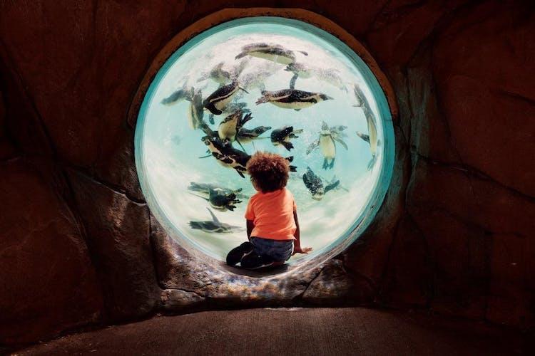 ZSL London Zoo ZooLife 1.jpg