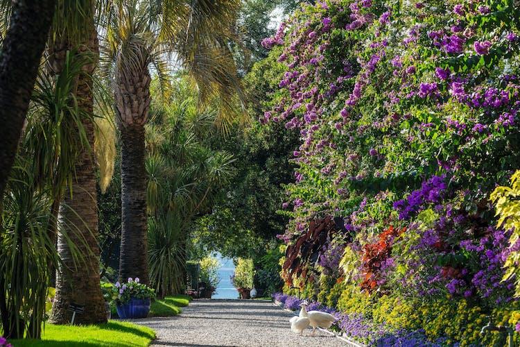 5. Isola Madre_Giardino Botanico_©Ph Dario Fusaro.jpg